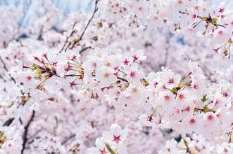 春なのに、春だから